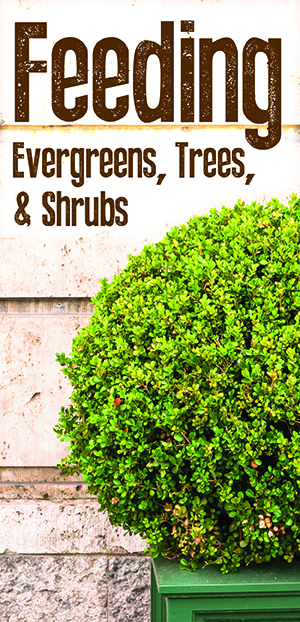 Feed Your Evergreens, Trees, and Shrubs
